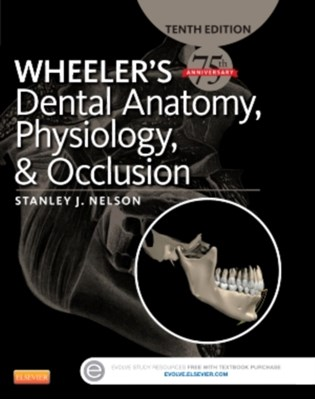 Wheeler's Dental Anatomy, Physiology and Occlusion Stanley J. Nelson 9780323263238