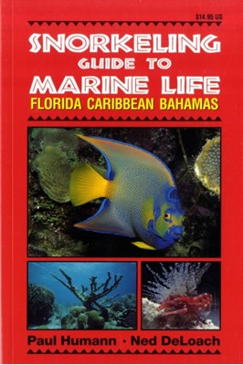 Snorkeling Guide to Marine Life Paul Humann, Ned DeLoach 9781878348104