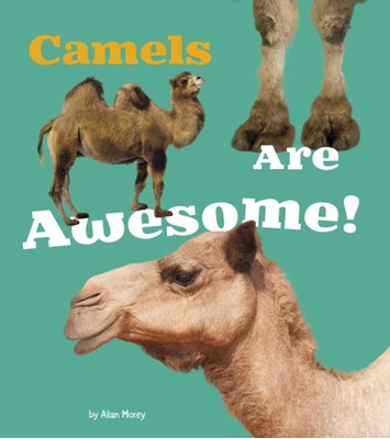 Camels Are Awesome! Allan Morey 9781474702577
