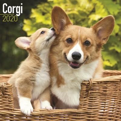 Corgi Calendar 2020 Avonside Publishing Ltd 9781785805929