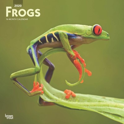 Frogs 2020 Square Wall Calendar Inc Browntrout Publishers, Browntrout Publishers Inc 9781975407353