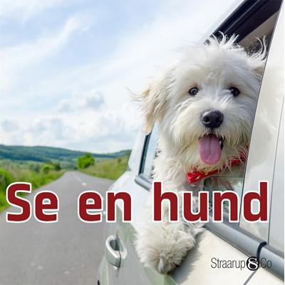 Se en hund Marianne Randel Søndergaard 9788770184793