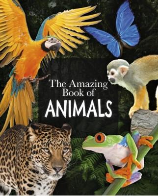 The Amazing Book of Animals Dr Michael Leach, Dr Meriel Lland 9781789508345