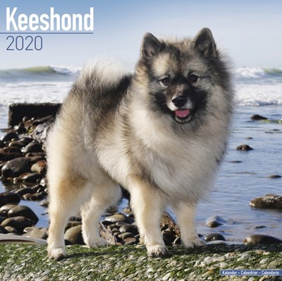 Keeshond Calendar 2020 Avonside Publishing Ltd 9781785806209