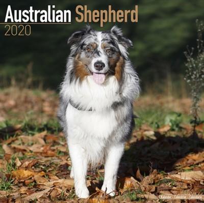 Australian Shepherd Calendar 2020 Avonside Publishing Ltd 9781785805615