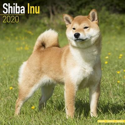 Shiba Inu Calendar 2020 Avonside Publishing Ltd 9781785806568