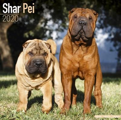 Shar Pei Calendar 2020 Avonside Publishing Ltd 9781785806544