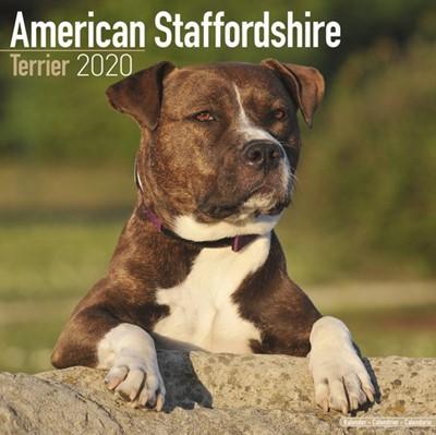 American Staffordshire Terrier Calendar 2020 Avonside Publishing Ltd 9781785805592
