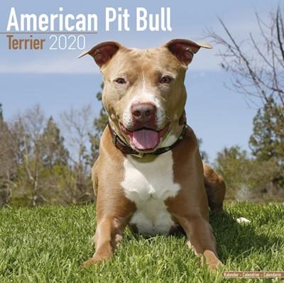 American Pit Bull Terrier Calendar 2020 Avonside Publishing Ltd 9781785805585