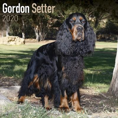 Gordon Setter Calendar 2020 Avonside Publishing Ltd 9781785806117