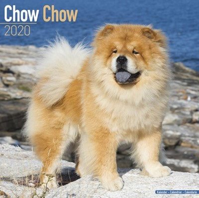 Chow Chow Calendar 2020 Avonside Publishing Ltd 9781785805882