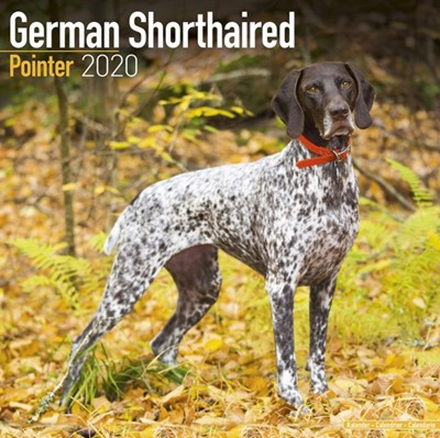 German Shorthaired Pointer Calendar 2020 Avonside Publishing Ltd 9781785806094