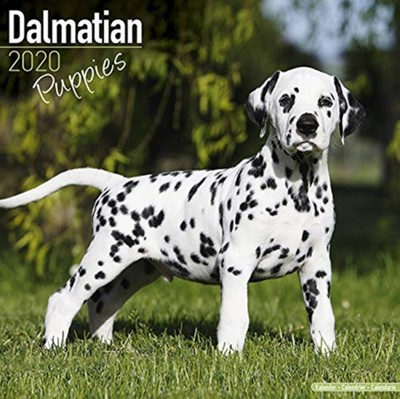 Dalmatian Puppies Calendar 2020 Avonside Publishing Ltd 9781785806742