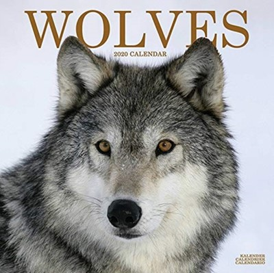 Wolves Calendar 2020 Avonside Publishing Ltd 9781785807244