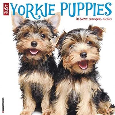 Just Yorkie Puppies 2020 Wall Calendar (Dog Breed Calendar) Willow Creek Press 9781549208386