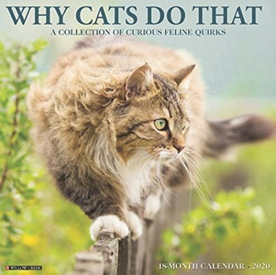 Why Cats Do That 2020 Wall Calendar Willow Creek Press 9781549208287