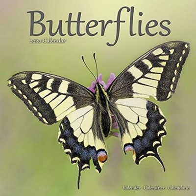 Butterflies Calendar 2020 Avonside Publishing Ltd 9781785806957