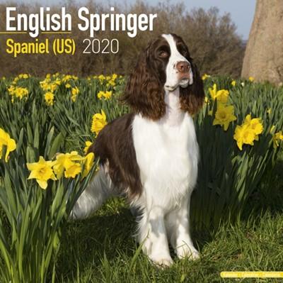 English Springer Spaniel (US) Calendar 2020 Avonside Publishing Ltd 9781785806032