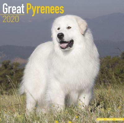 Great Pyreness Calendar 2020 Avonside Publishing Ltd 9781785806148