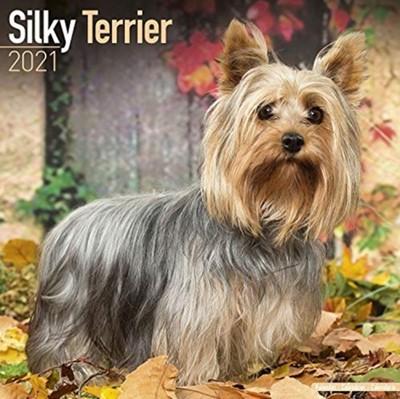 Silky Terrier 2021 Wall Calendar  9781785809309
